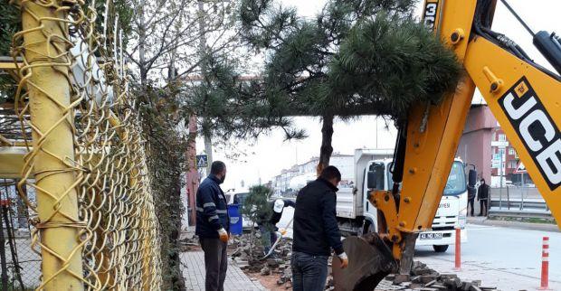 60 Evler üst geçit altında yol genişletmesinde çam zarar görürmüş