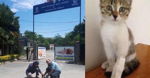 SEDAŞ  Çalışanları Yavru Kediyi Hayata Bağladı
