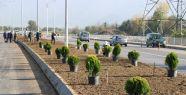 Salim Dervişoğlu Caddesi yeşillendirildi