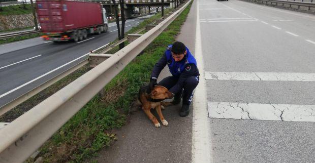 Yaralı köpek tedavi altına alındı